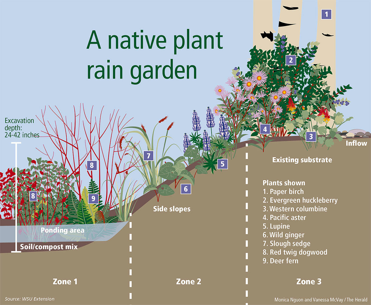 Rain gardens: Nature's sponge | Bot-Kenmore Reporter on rain illustration, rain barrels, bioswale design, rain gardens 101, rain art drawings, rain gutter downspout design, rain roses, gasification design, rain harvesting system design, french drain design, dry well design, rain water design, rain construction,